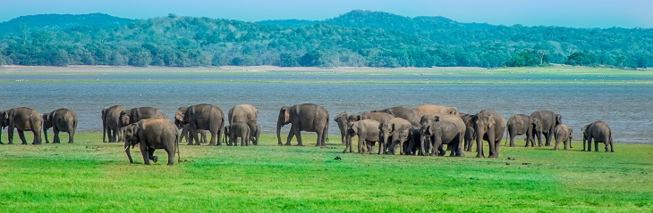 Links Travel & Tours announces a new Sri Lanka tour